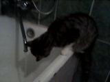 Мой котик умничка:)