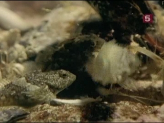 BBC Мир Природы. Между сушей и водой / The Natural World. At the Edge of the Sea