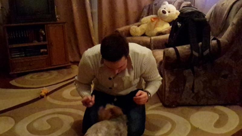 псих и собака смешно смешное видео лол ржачно ржач умора