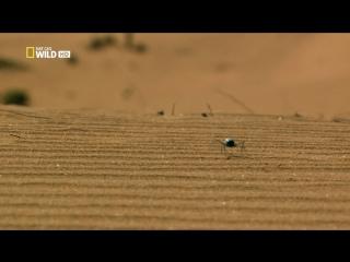 Хищники пустыни Намиб - 2 ч.