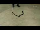 Спасатель змей 4 я серия 2013