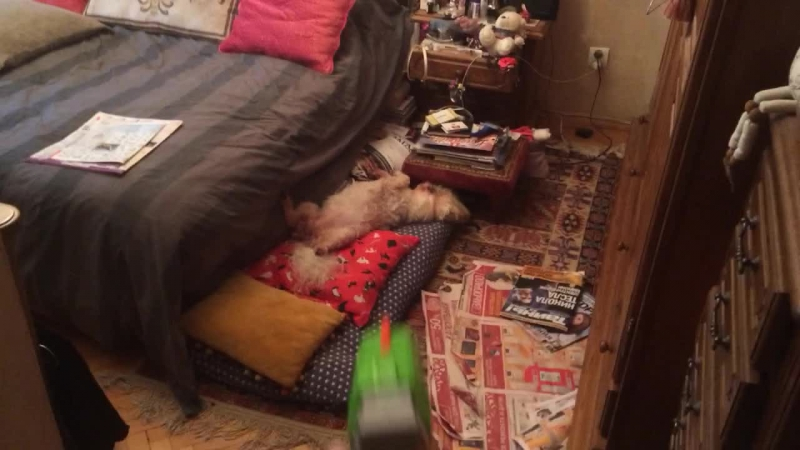 Андрюшка- пугатель собак