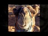 «Животные 3» под музыку Ірина Білик - Хай живе НАДІЯ. Picrolla
