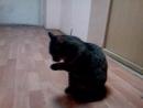 кот Обосрыш моется