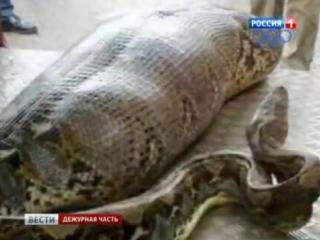 Интернет-пользователи не верят, что змея может проглотить человека