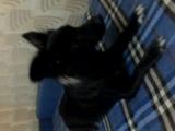 моя поющая собака