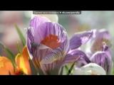 Цветы. 6. под музыку Джеймс Блант - For You . Picrolla
