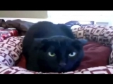 Самые смешные видео про котов Супер приколы! Выпуск 4