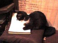 Кошка Шапка, 27 апреля 1979, Львов, id37777416