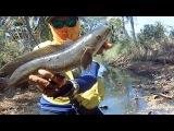 Как рыбачат в Таиланде   Змееголов