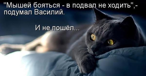 https://pp.vk.me/c636016/v636016183/4a9/qjsMGk08xUc.jpg