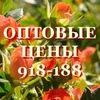 Доставка цветов Ставрополь - цветы в Ставрополе