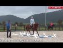 Тренировка на кавалетти для баланса всадника  #EuroHorse