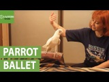 Попугай услышал знаменитый балет. То, что учудила птичка — просто фантастика!