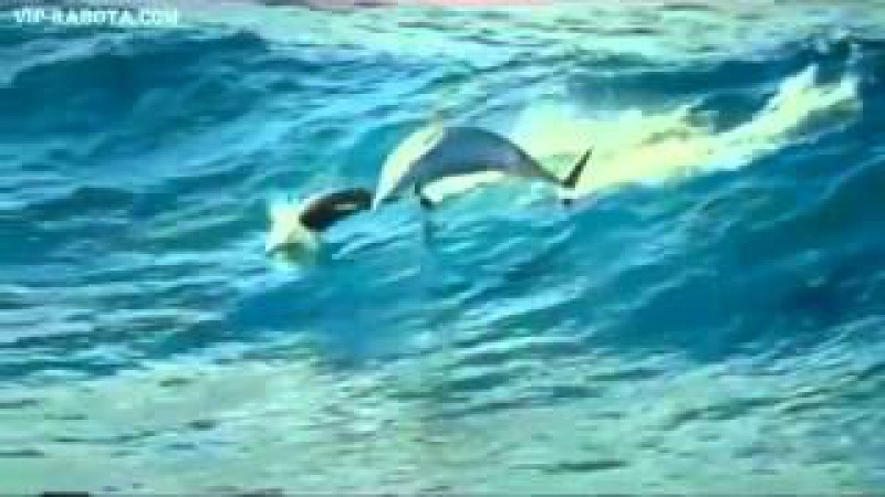 Музыка - Релакс! Дельфины прекрасная музыка