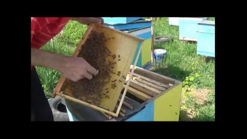 ▶️Вывод маток👨🚀С помощью Джентерского сота или системы Никот. Вывод пчелиных маток 🌸👨🌾🙇