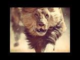 Нападение львов В поисках людоеда /Документальный фильм National Geographic