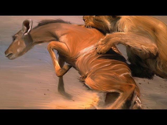 Львы.В поисках жертвы.Охота львов на Буйволов и других животных.Док фильм
