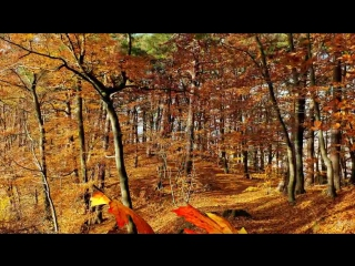 Прогулка по осеннему лесу и волшебная музыка для тебя!