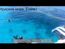 Египет, Израиль Февраль 2014 (нда, 6 путешествие нас занесло на Красное море)