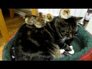 ЖИВОТНЫЕ ПРИКОЛЫ 2016 - КОТЫ ПРИКОЛЫ 2016 - Funny Cats 2016