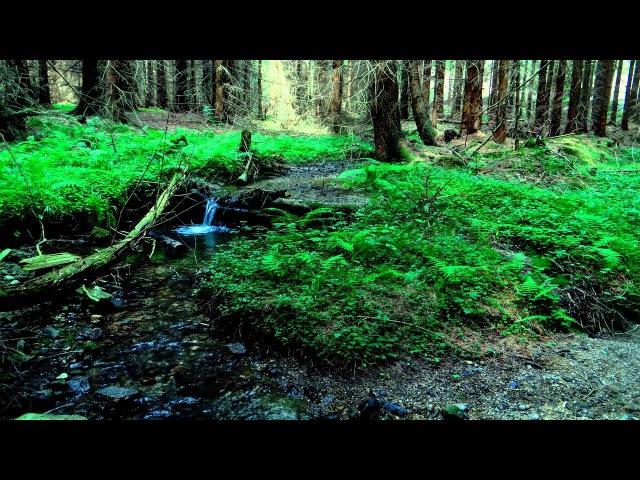 Звуки природы. Живой лес. Музыка для сна