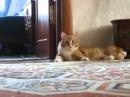 Кот встал и пошел ахах