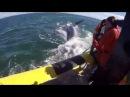 Огромный кит проплыл прямо под лодкой с туристами