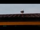 Чайка залезла на крышу постройки на пляже Анапы