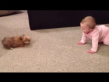 BABY DOG WHISPERER! Cesar Millan has nothing on her!! Shorkie Puppy Talks to Baby - YouTube