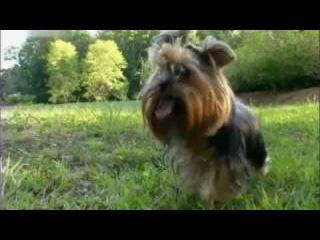 Введение в собаковедение 101 Dogs Часть 6 Animal Planet