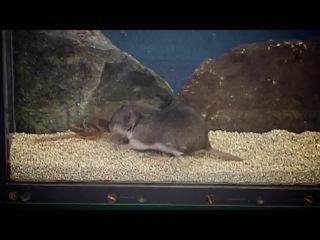 Stinging Scorpion vs. Pain-Defying Mouse