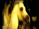 Клип про лошадей