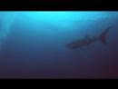 Дайвинг Архипелаг Му Ко Чанг. Koh Chang Diving. Ко Чанг Азия - Ваш Тропический Рай.