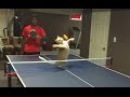 Cats Playing Ping Pong Compilation CFS