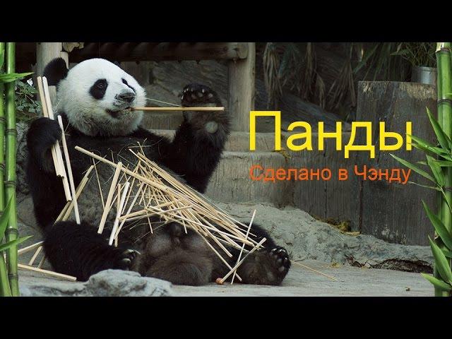 Панды. Сделано в Чэнду