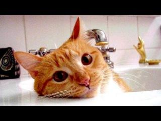 Кошки, которые любят воду
