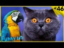 Смешные Попугаи и Кошки Смешные Коты и Попугаи