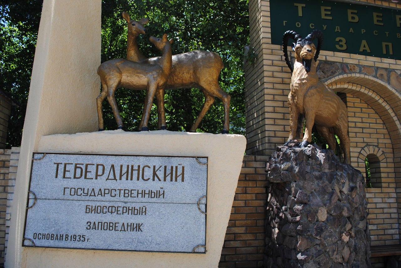 Житель Зеленчукского района вырубил 27 деревьев на территории Тебердинского государственного заповедника