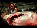 Касатка убила АКУЛУ! Могучие челюсти. Самое умное океанское животное. Взгляд изнутри глазами хищника