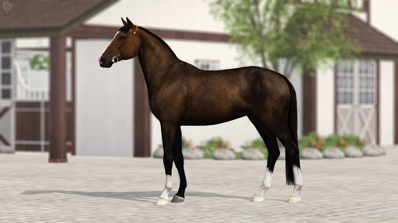 Регистрация лошадей в RHF 2 NG0aeTNifIc