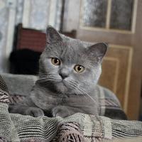 Наталья Башкатова