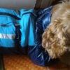 Одежда для животных в г.Луганск