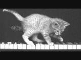 Kitten on the Keys - Fun Ragtime Piano