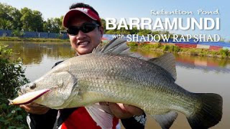Catching Barramundi With Rapala Shadow Rap Shad Ultra Light Pop