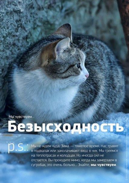 Фото №456241033 со страницы Роксоланы Шперчук