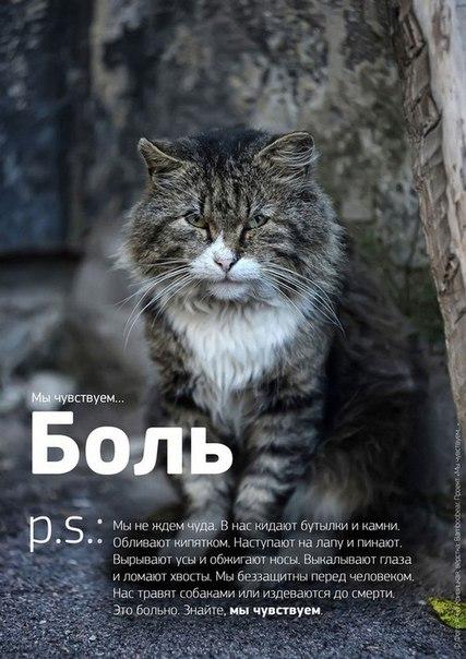 Фото №456241035 со страницы Роксоланы Шперчук