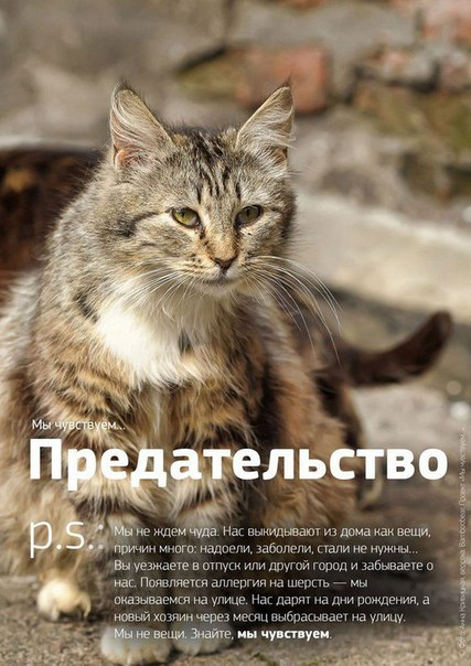Фото №456241036 со страницы Роксоланы Шперчук