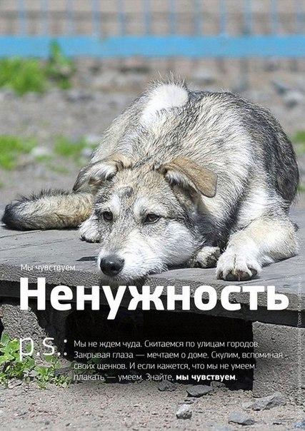 Фото №456241037 со страницы Роксоланы Шперчук