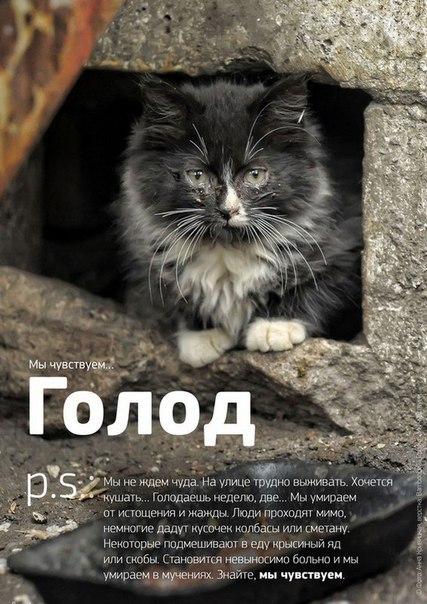 Фото №456241038 со страницы Роксоланы Шперчук